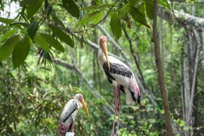 Penang Bird Park