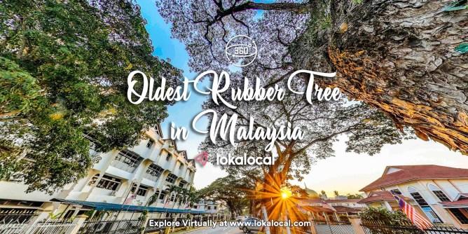 Ultimate Virtual Tours in Malaysia - Oldest Rubber Tree in Malaysia - www.lokalocal.com