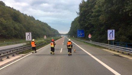 Der Schwan spazierte auf der A46 in Iserlohn um her. Die Feuerwehr musste in einfangen. Foto: Feuerwehr Iserlohn