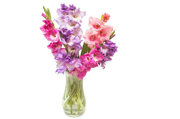 Mothers Day Gladiolus