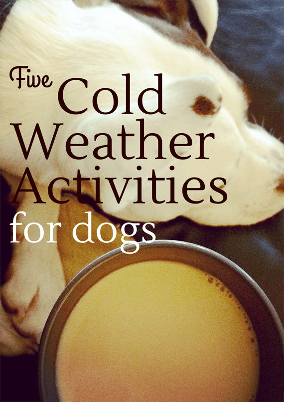 5 Cold Weather Activities for Dogs