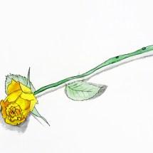 Enfant- Etude de la fleur Aquarelle