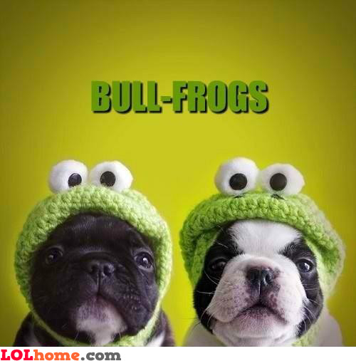 bull-frogs