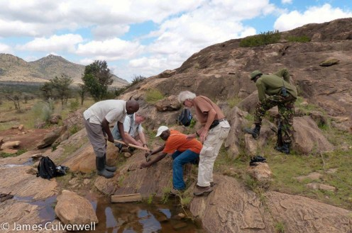 Team of herpetologist, together with Dr. Tom Butynski, working on one of Lolldaiga Hills Ranch northern Kopjes.