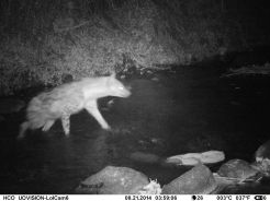 IMAG0015 - Spotted hyena