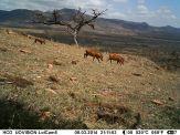 IMAG1431 - 3 Warthogs