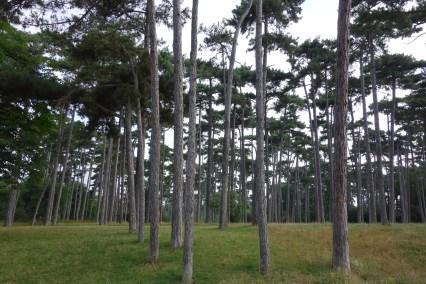 Bois de Boulogne IV