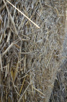 Straw Bales I