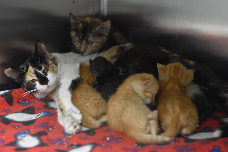 Lollypop Farm Rescues 90+ Cats from House Fire • Lollypop Farm