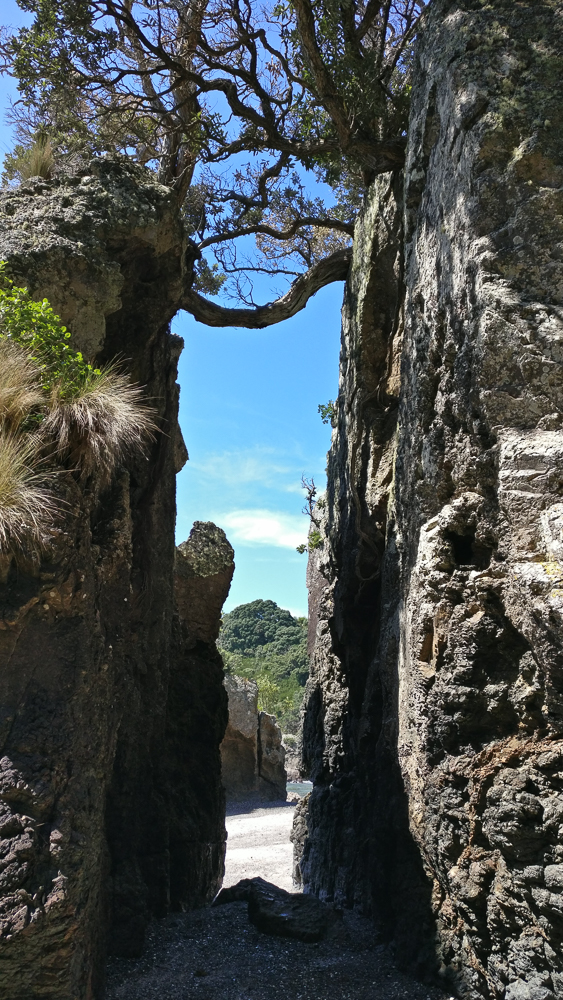 Ile Tiritiri Matangi - pause plage