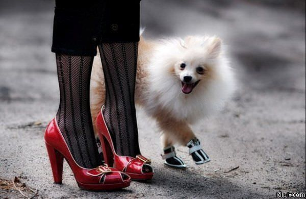Fancy Shoes Dog