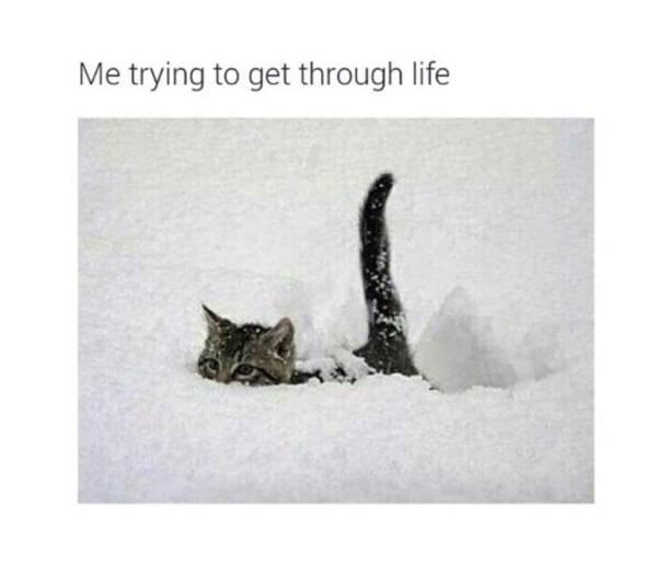 Funny Af Cat Memes