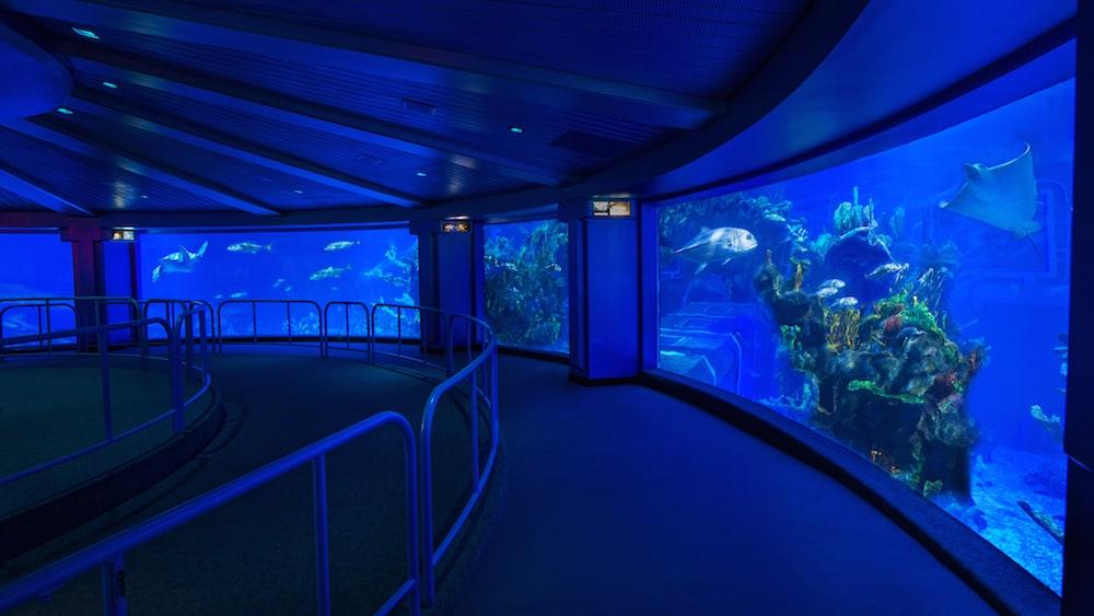 Finding Nemo Fish Tank Aquarium
