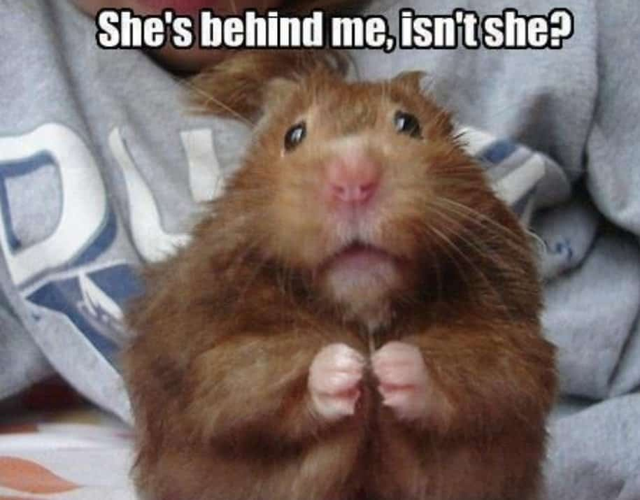 20 Hilarious Animal Memes That Will Make You Lol