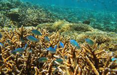 East Lombok Snorkeling Trip