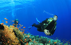 Lombok Daily Dive