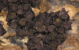 Bats Cave Temple