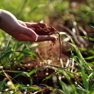Lombrico, un trita rifiuti biologico. Ricicla gli scarti e nutre la terra