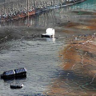 Acinetobacter, il batterio spazzino che pulisce il mare