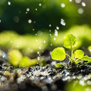 Risparmio idrico, i lombrichi aumentano di 20 volte la capacità di trattenere l'acqua