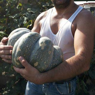 I nostri clienti, Giovanni da Salerno: zucca da 14 kg grazie ai vostri lombrichi