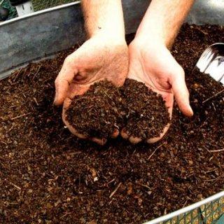 Lombricoltura, di quanto spazio e cibo hanno bisogno i lombrichi?