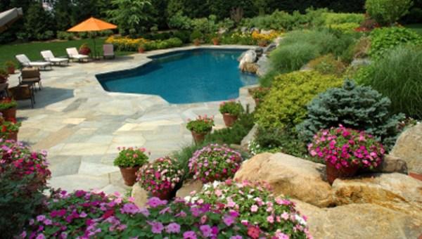 flowers swimming pool