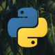 Python programming language logo on a background of palm tree leaves