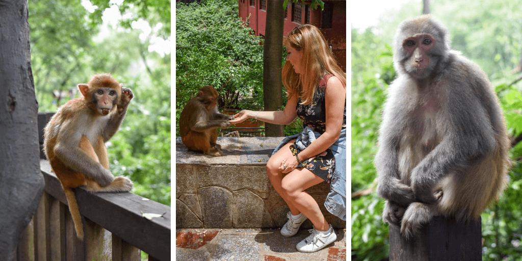 Qianling Park in Guiyang China - wild monkeys