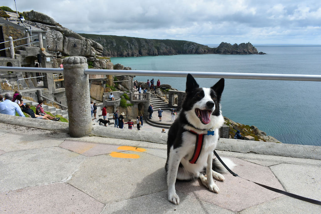 Dogs at Minack Theatre Cornwall
