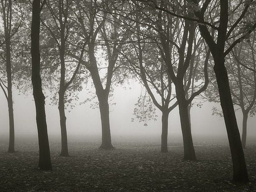 foggy-regents-park