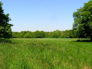 tibbets-ride-fields-and-trees.jpg