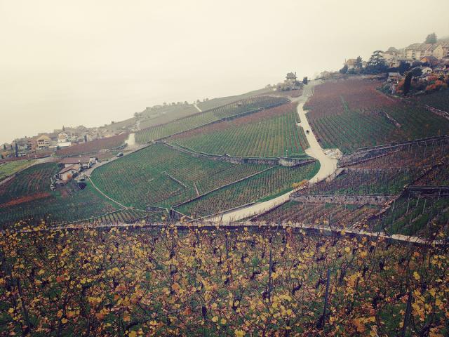 Switzerland_lavaux_vineyard_2