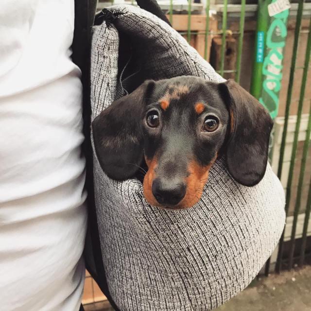 dog-in-london
