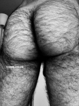ha hairy arse