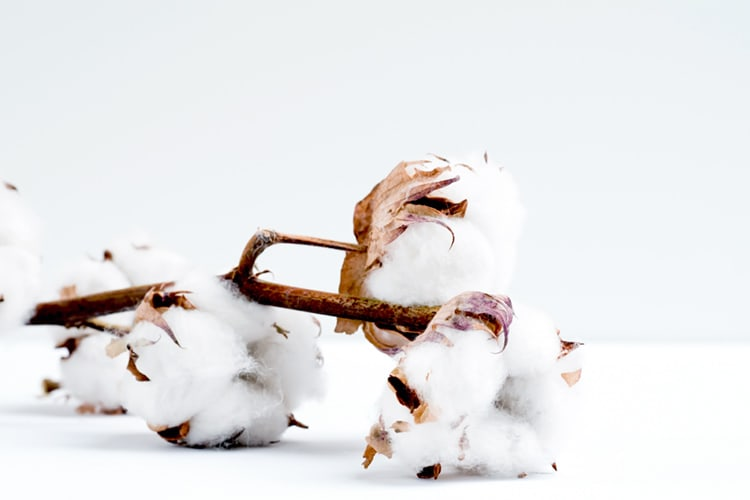 coton biologique