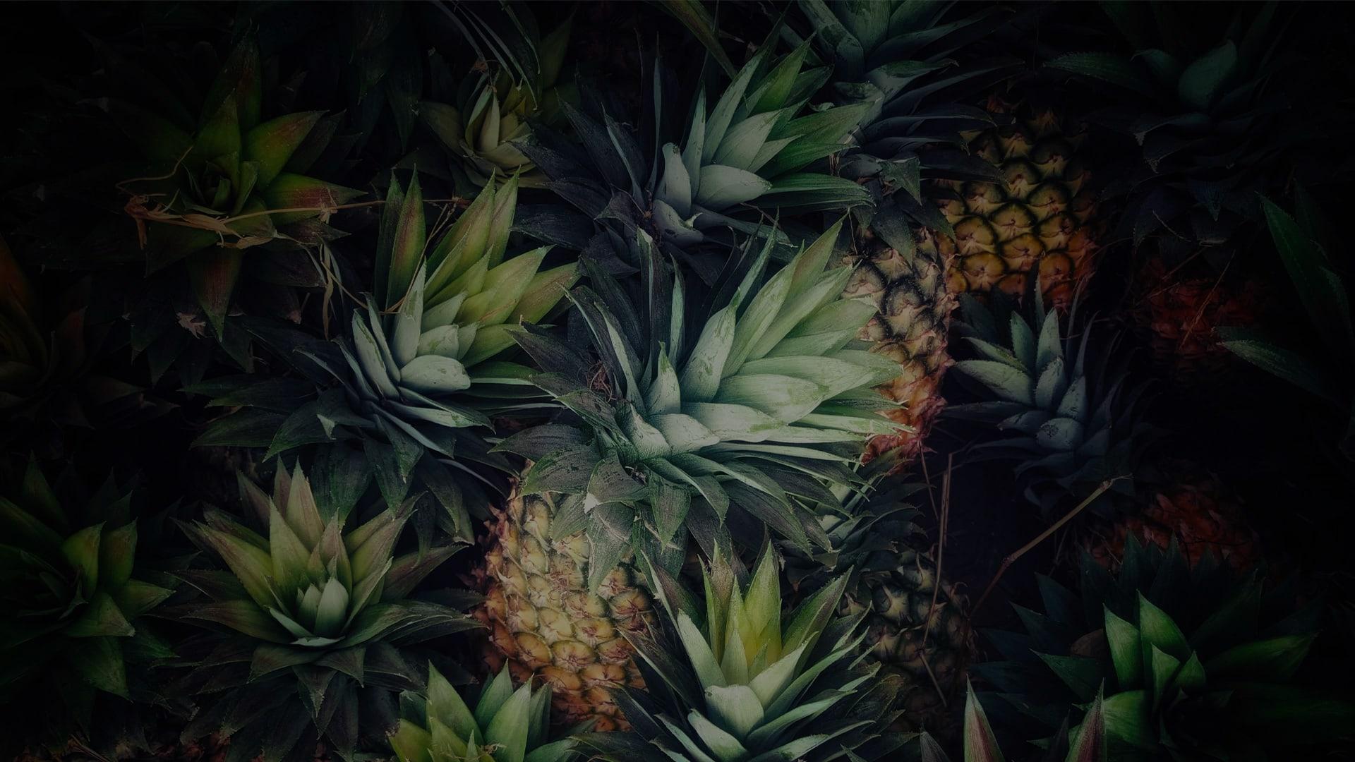 cuir ananas pinatex