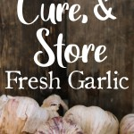 So, this year you wanted to try growing garlic? You planted them, tended to them all year, and now it's summer. The leaves on your plants are starting to die back & you're anxious to have your first taste of real garlic. So what's next?? In this post, we'll walk you through identifying when to harvest your garlic, the curing process, and long-term storage.