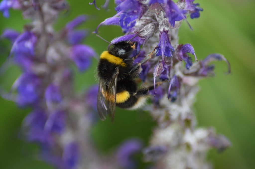 You may not realize this, but pollinators - like bees, butterflies, and hummingbirds - play a huge role in the success of your garden. So when you're choosing your plants & designing your layout, make sure you also plan for pollinators.
