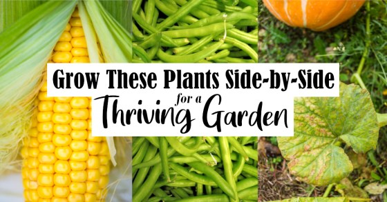 Grow These Plants Side-by-Side for a Prosperous Garden