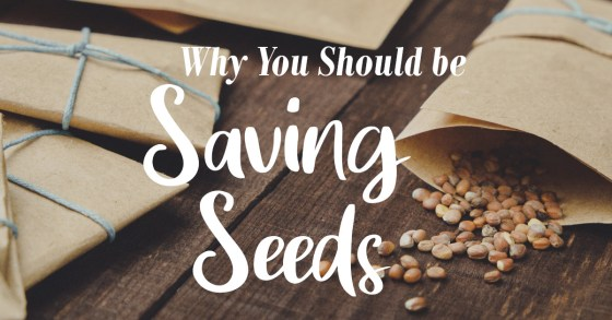 The Importance of Saving Seeds