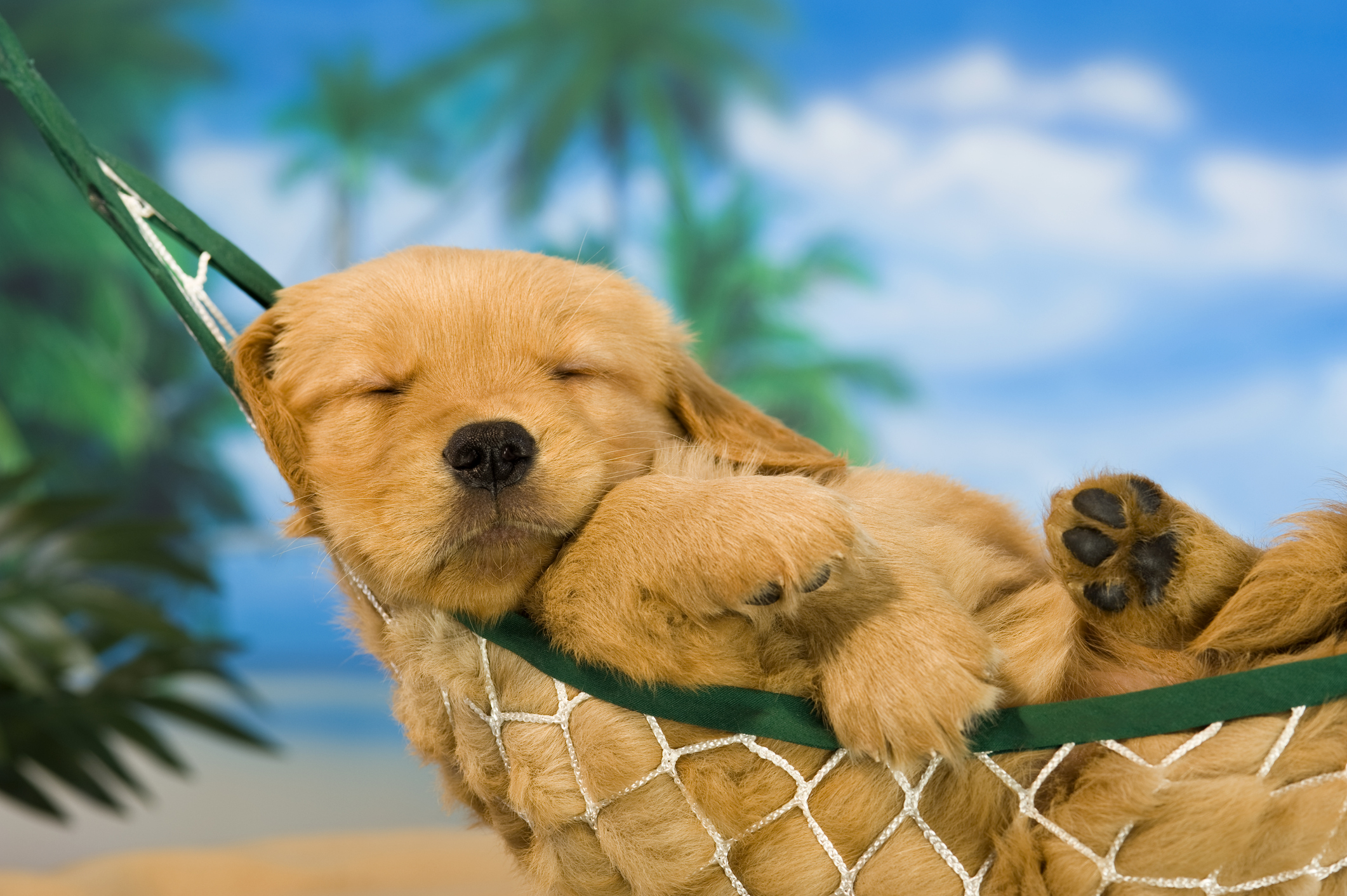 Animal Lovers Will Love This Dream Job Reviewing Pet Friendly Hotels Lonely Planet