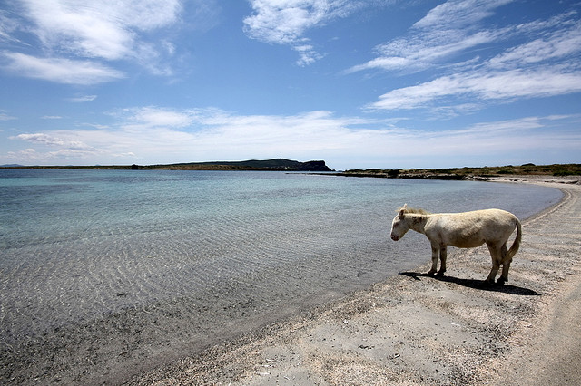 La spiaggia dell'Asinara, foto di Roberto Cossu / Flickr
