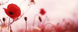 Remembrance Day: Sixty Five Letters