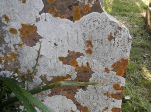 headstone of Unknown Randle at Berry Pomeroy church, Devon (click for a larger image)
