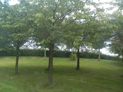 beautiful lawns around the park