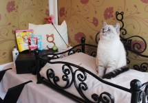 Longcroft Christmas Cat Hotel - Luxury