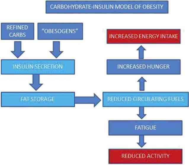 Intermittent fasting, life extension, and the carbohydrate-insulin model of obesity