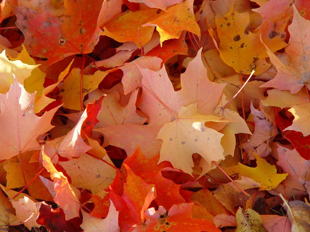 Fall Free Wallpaper Cave Fall In Love With Foliage This Autumn On An Amazing