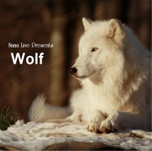 Wolf Inspirational Short Quotes - Year of Clean Water
